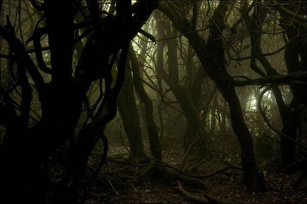 Лес в сентябре фото подборка (14)