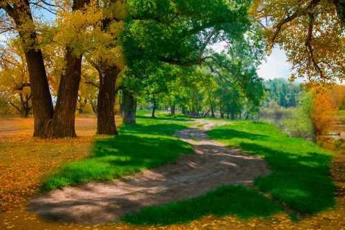 Лес в сентябре фото подборка (15)