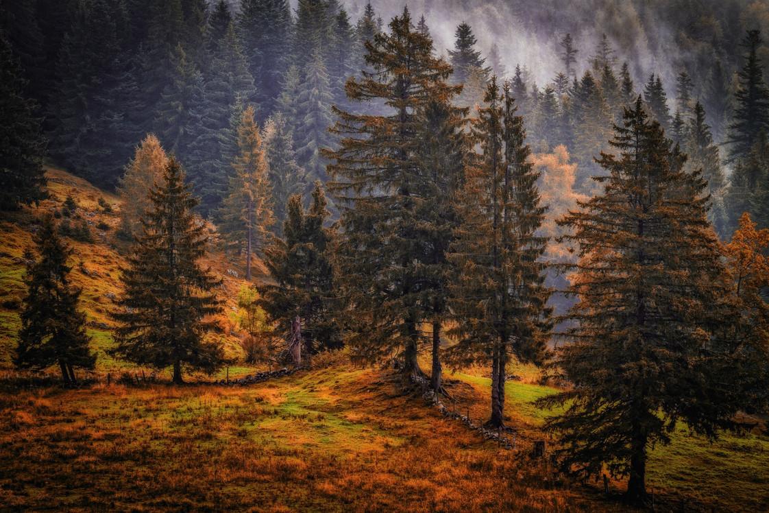 Лес в сентябре фото подборка (17)