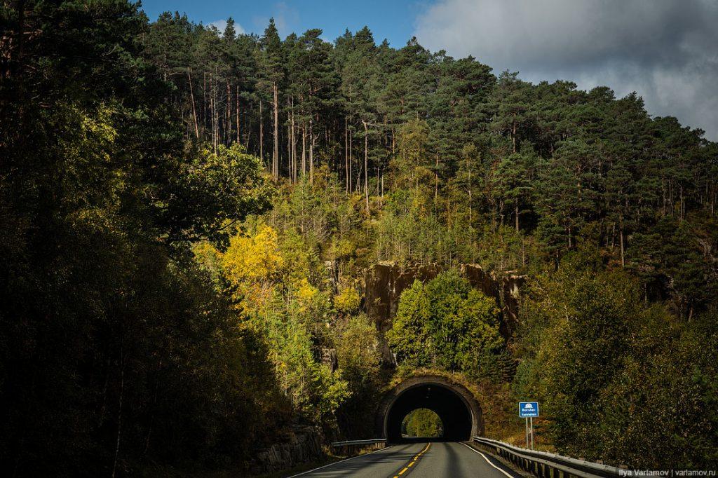 Лес в сентябре фото подборка (18)