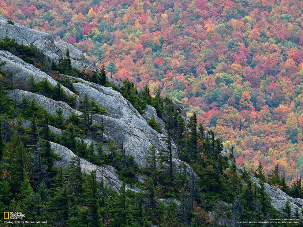 Лес в сентябре фото подборка (19)