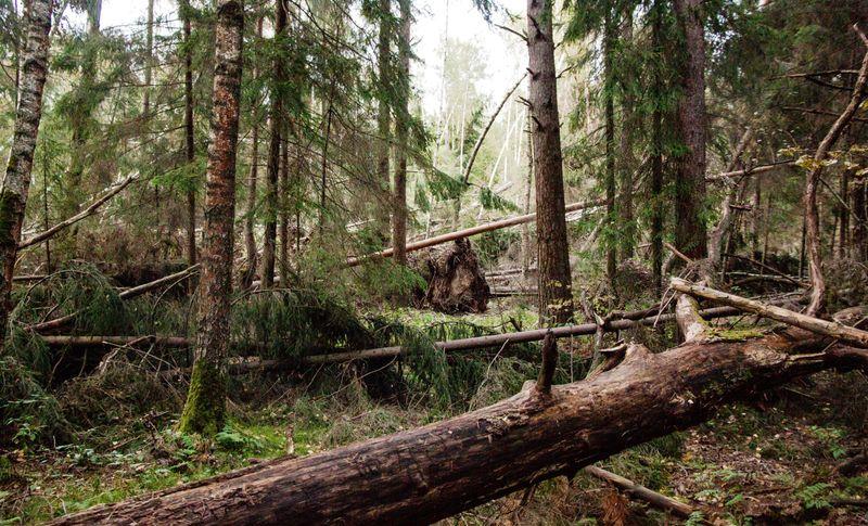 Лес в сентябре фото подборка (2)