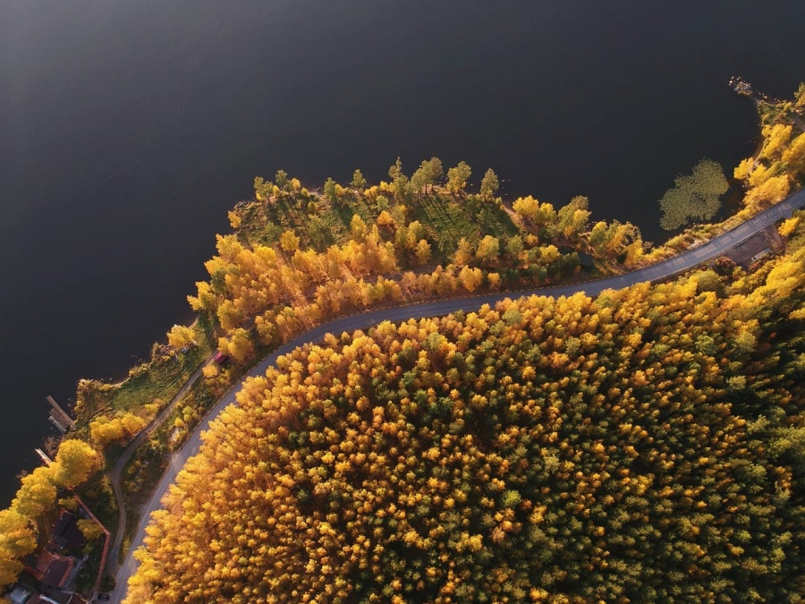 Лес в сентябре фото подборка (20)