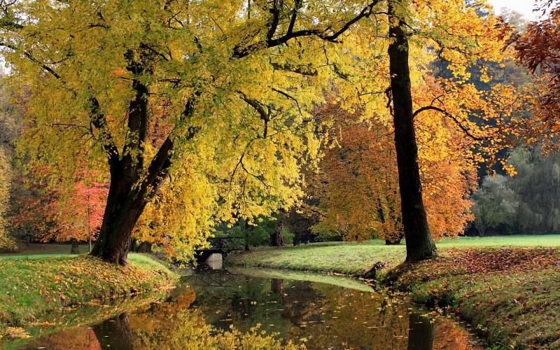Лес в сентябре фото подборка (21)