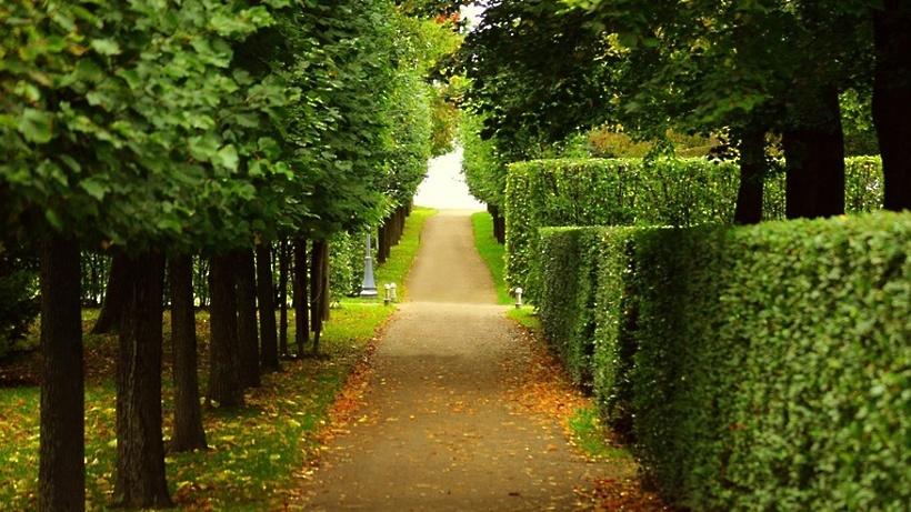 Лес в сентябре фото подборка (23)