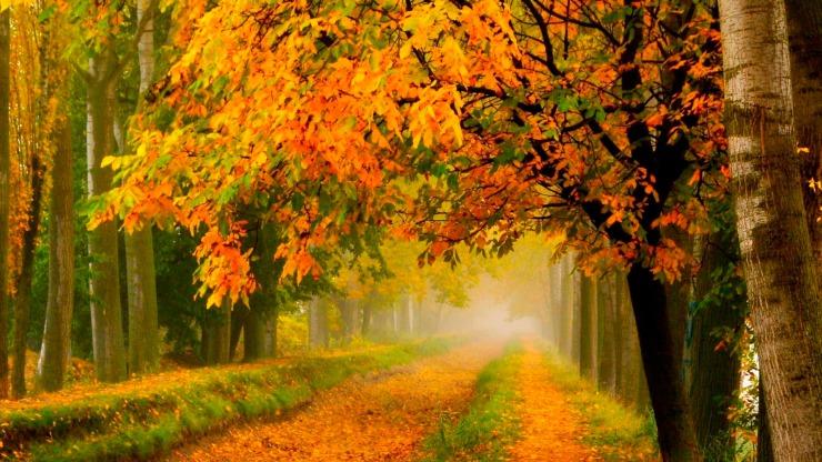 Лес в сентябре фото подборка (26)
