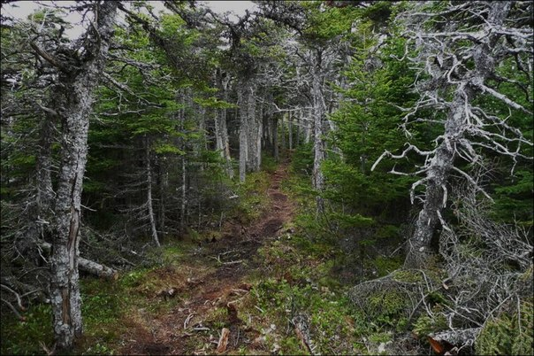 Лес в сентябре фото подборка (4)
