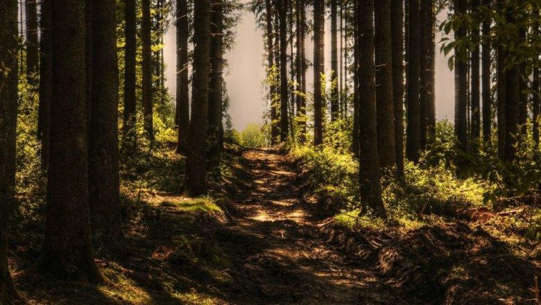 Лес в сентябре фото подборка (5)