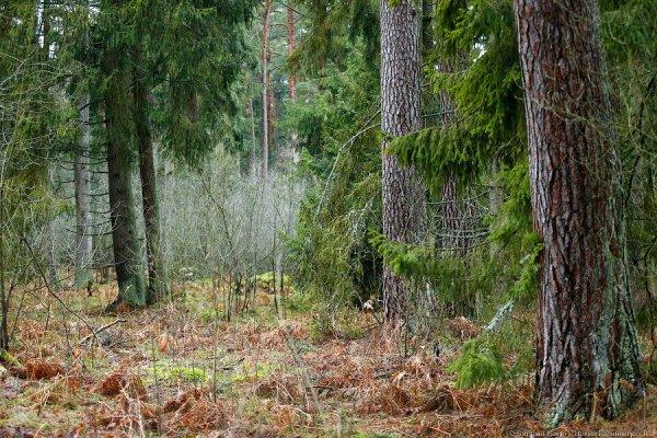 Лес в сентябре фото подборка (6)