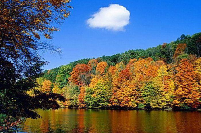 Лес в сентябре фото подборка (8)