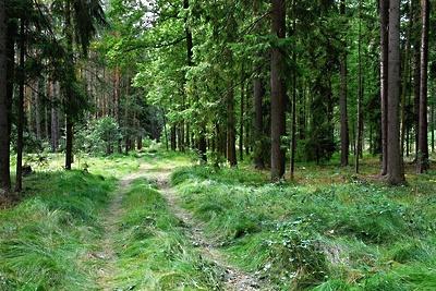 Лес в сентябре фото подборка (9)
