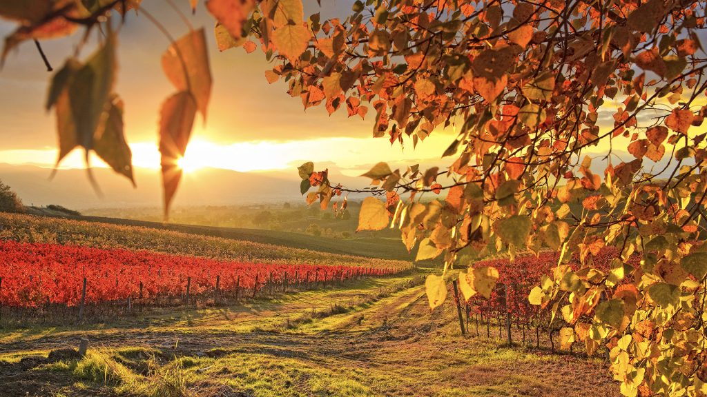 Dawn over the autumnal vineyards near Montefalco