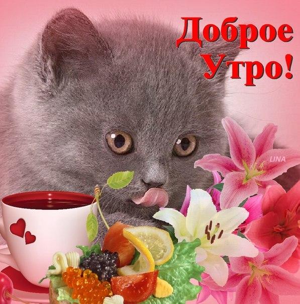 Пожелания доброго утра любимой открытки, картинках малышарики открытка