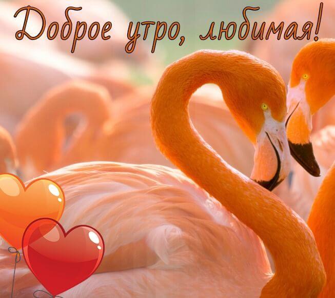 Самые красивые открытки с добрым утром для любимой (10)