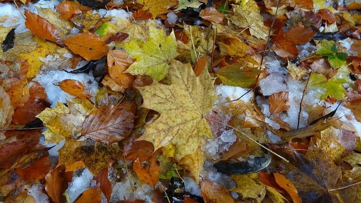 Снег в сентябре картинки прикольные (1)