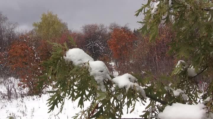 Снег в сентябре картинки прикольные (11)