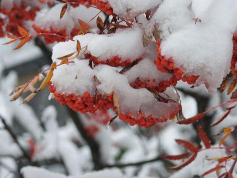 Снег в сентябре картинки прикольные (13)