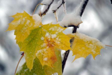Снег в сентябре картинки прикольные (14)