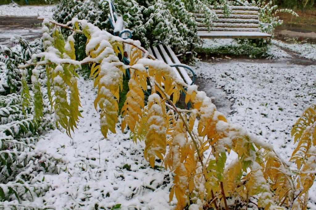 Снег в сентябре картинки прикольные (15)