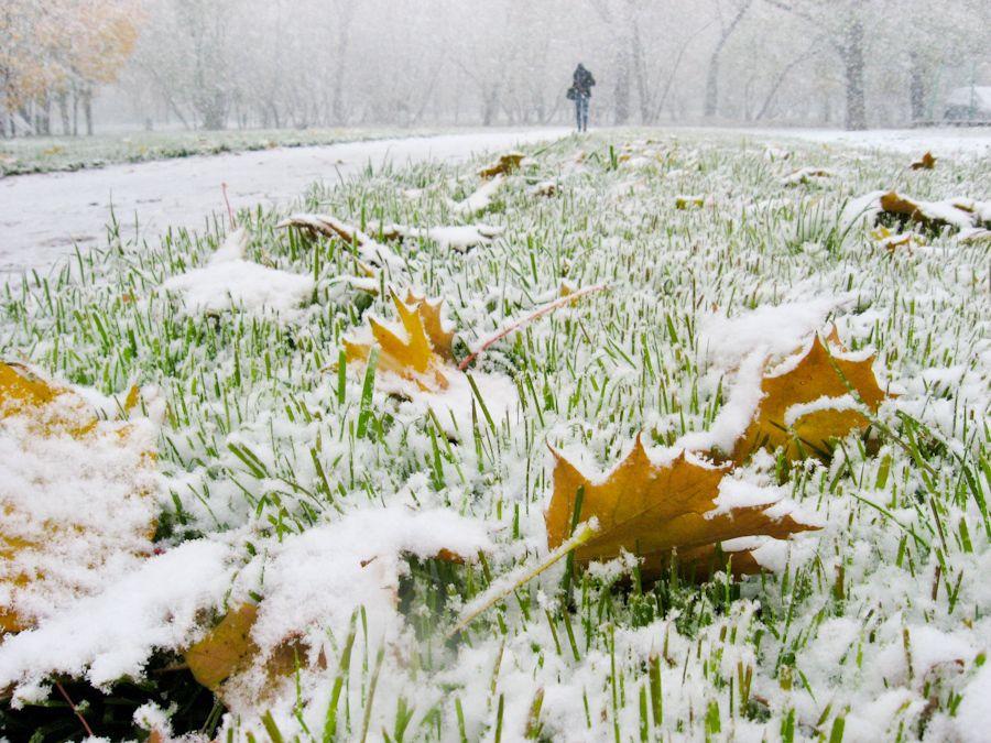 Снег в сентябре картинки прикольные (18)