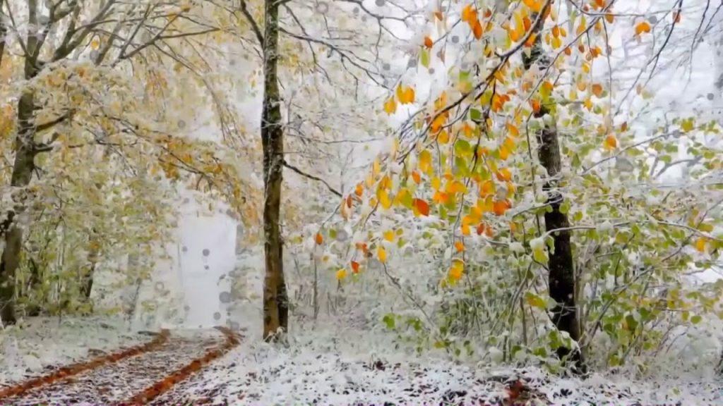 Снег в сентябре картинки прикольные (19)