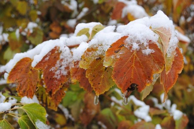 Снег в сентябре картинки прикольные (20)
