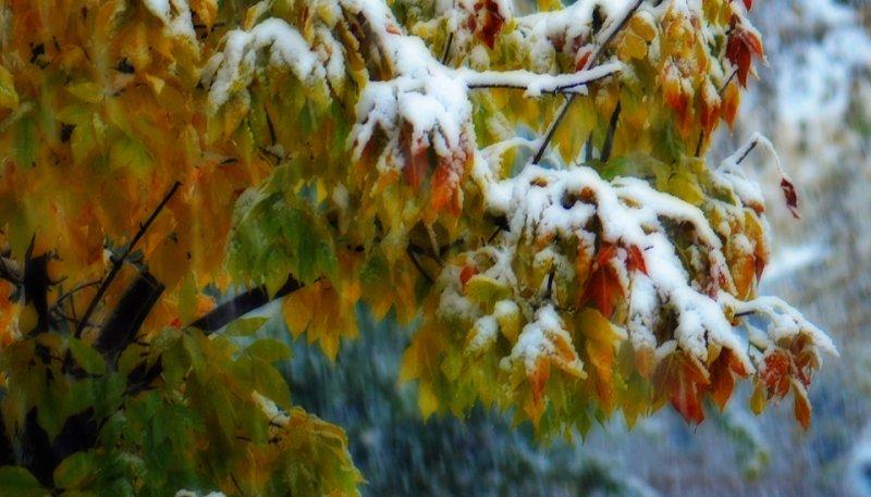 Снег в сентябре картинки прикольные (5)