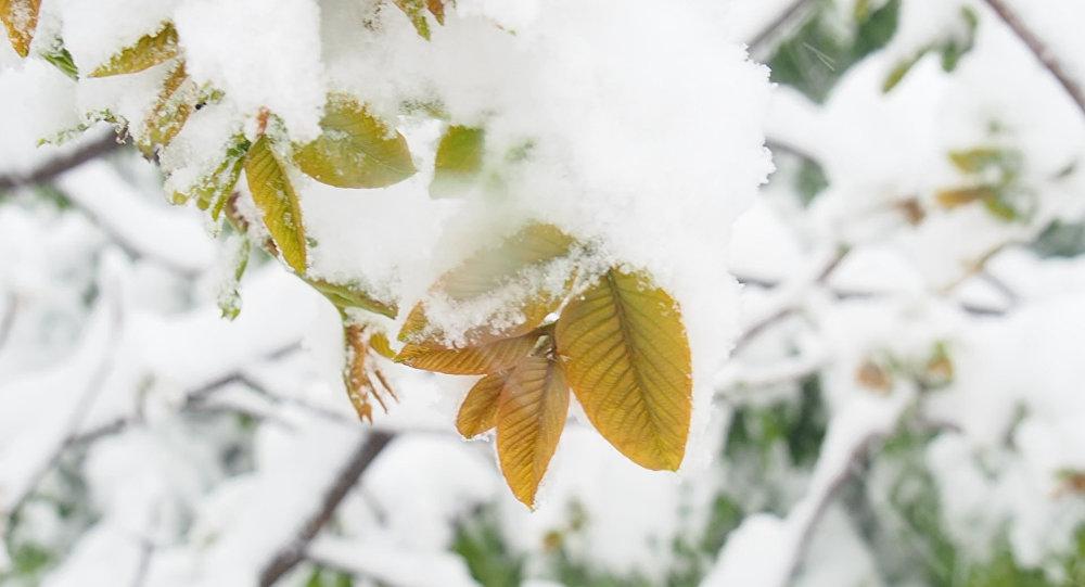 Снег в сентябре картинки прикольные (7)