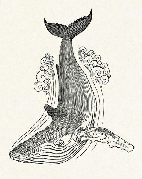 Тумблер картинки для срисовки кит - подборка (21)