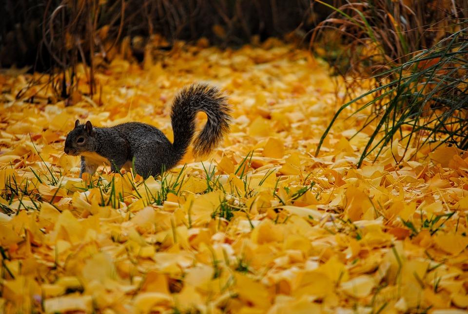 Что в сентябре происходит в живой природе, изменения осенью (1)