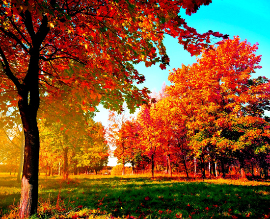 Что в сентябре происходит в живой природе, изменения осенью (2)