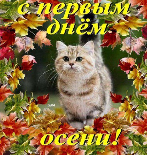 открытки поздравления с первым днем осени (2)