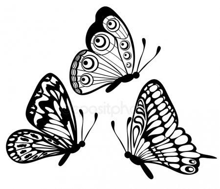 Бабочка чб рисунок и картинки красивые001