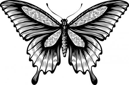 Бабочка чб рисунок и картинки красивые002
