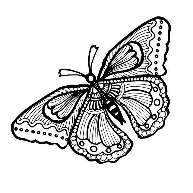 Бабочка чб рисунок и картинки красивые004