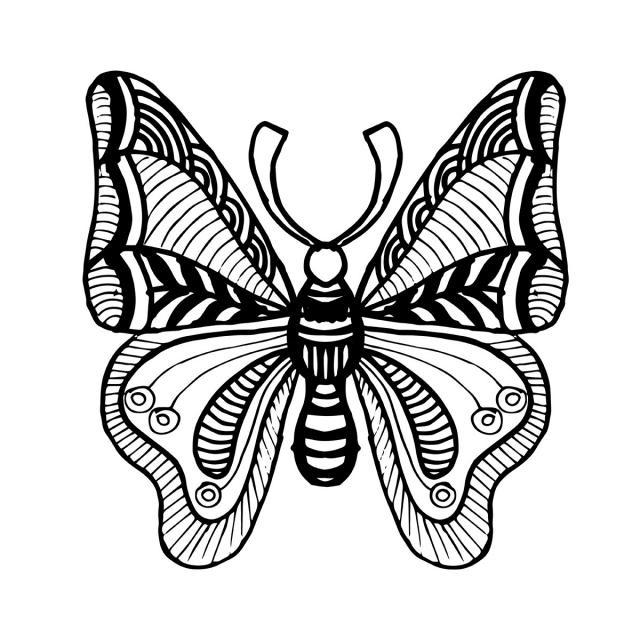 Бабочка чб рисунок и картинки красивые007