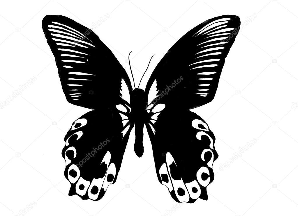 Бабочка чб рисунок и картинки красивые009