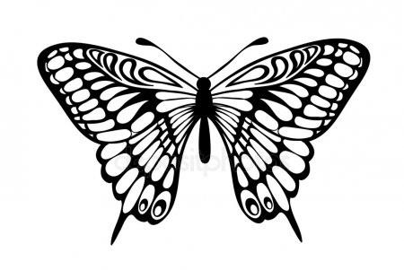 Бабочка чб рисунок и картинки красивые010