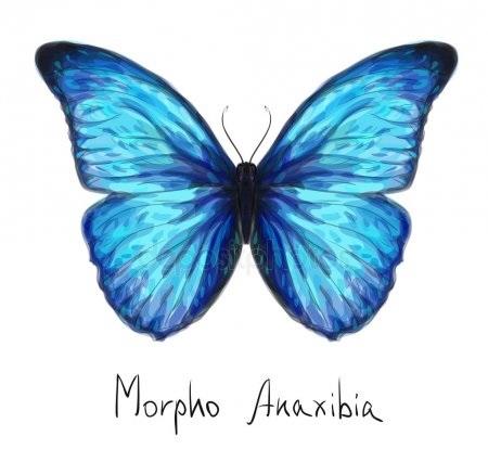 Бабочка чб рисунок и картинки красивые011
