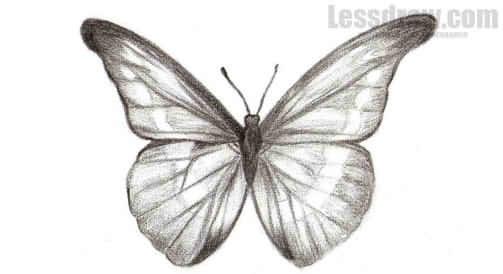 Бабочка чб рисунок и картинки красивые012