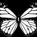 Бабочка чб рисунок и картинки красивые