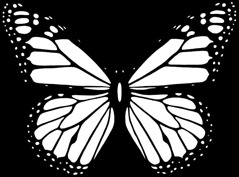 Бабочка чб рисунок и картинки красивые013