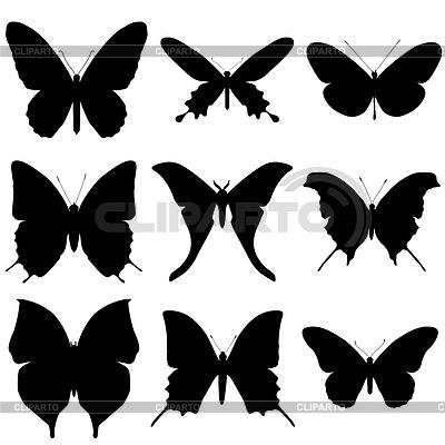 Бабочка чб рисунок и картинки красивые015