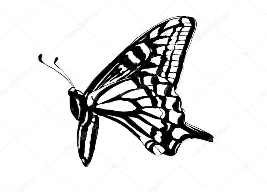 Бабочка чб рисунок и картинки красивые016