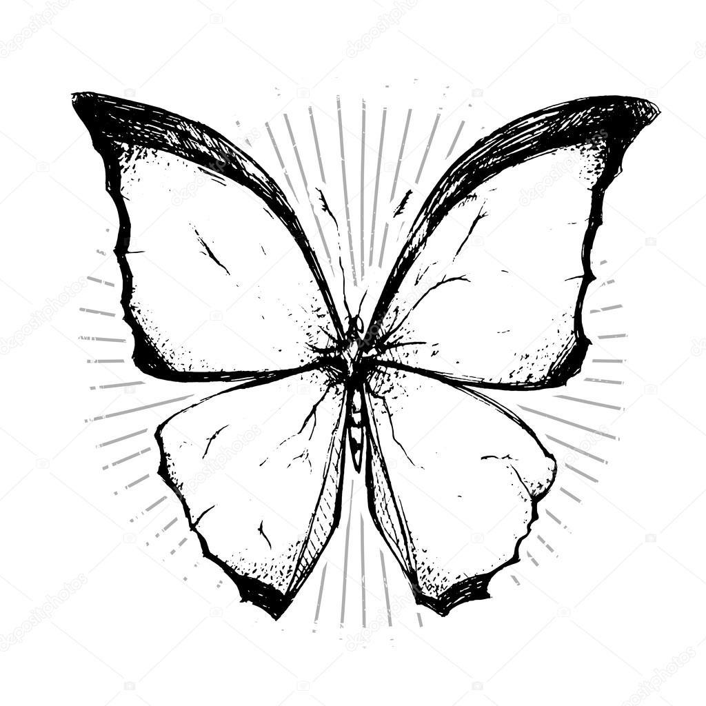 Бабочка чб рисунок и картинки красивые018
