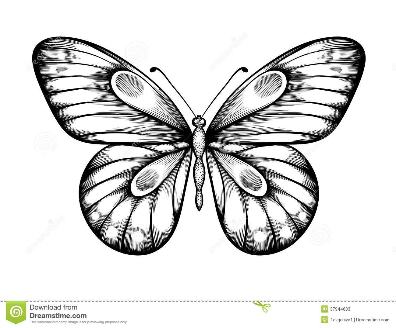 Бабочка чб рисунок и картинки красивые019