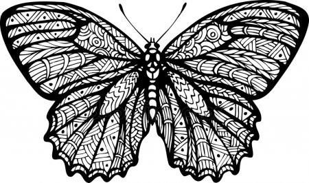 Бабочка чб рисунок и картинки красивые020