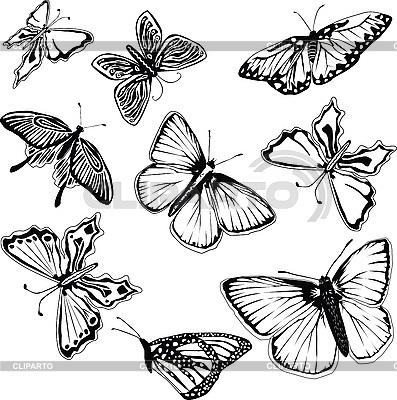 Бабочка чб рисунок и картинки красивые021