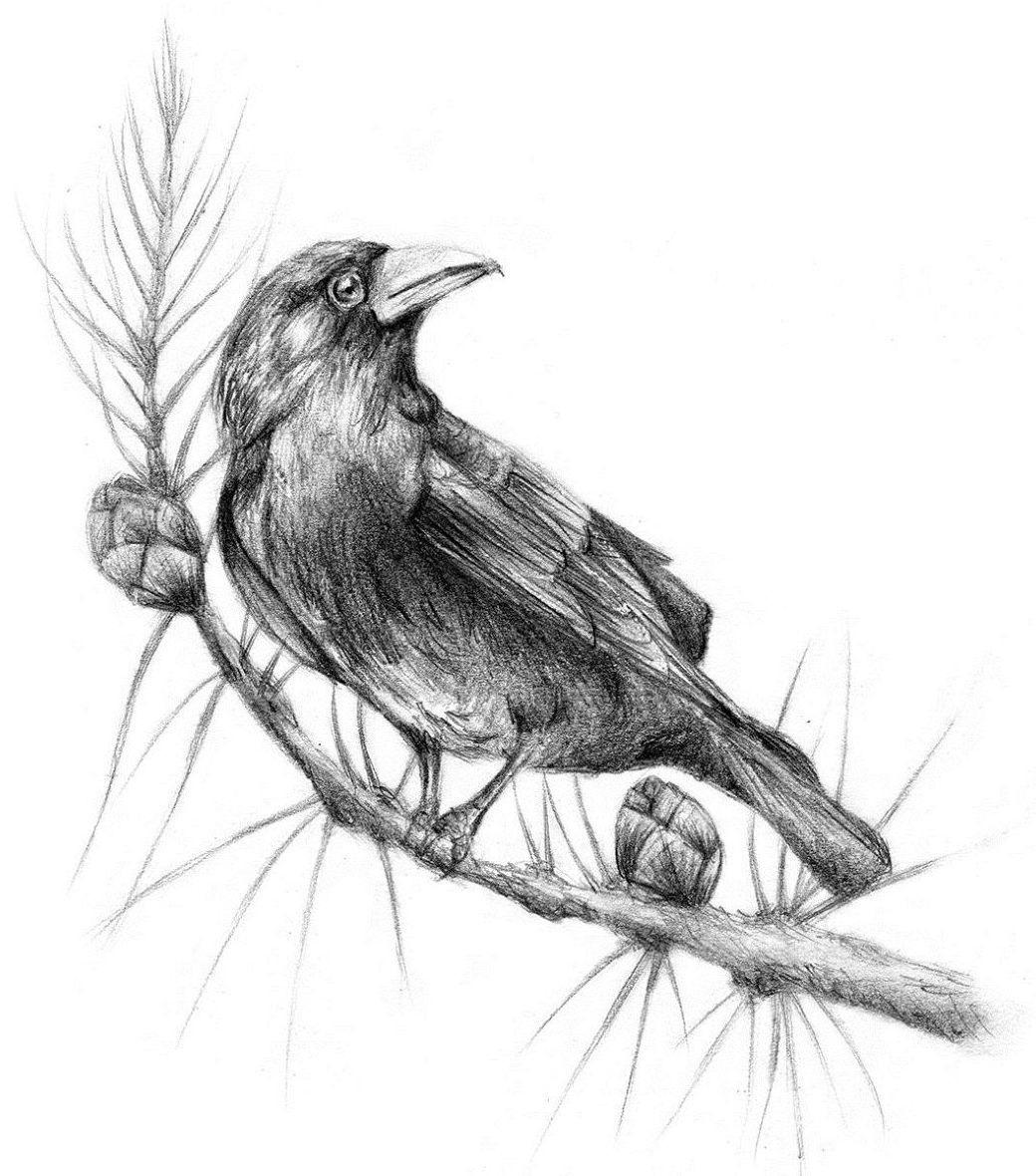 Ворона рисунок тату и эскизы010