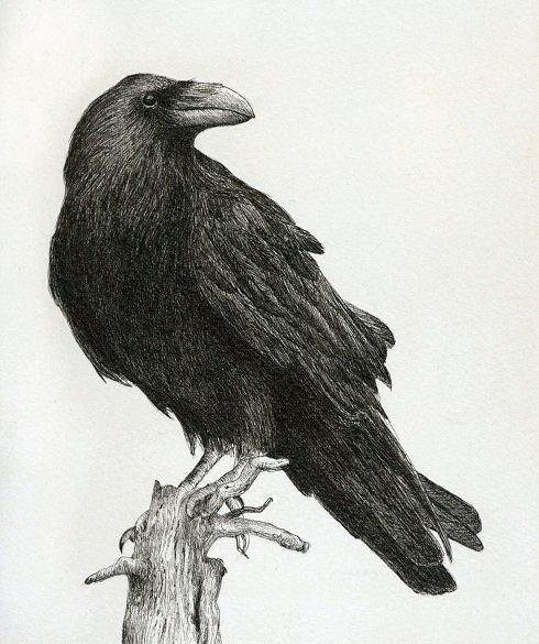 Ворона рисунок тату и эскизы013